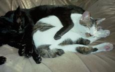 ドビへの哀悼・猫の日