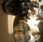 黒い猫とまだら猫
