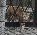散歩中にいた猫