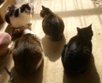 猫たちの影
