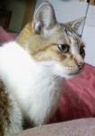 ある猫の肖像