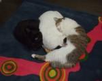 猫とじゅうたん