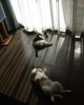 猫と光と影