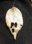 葉っぱのおばけ